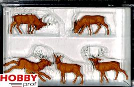 Stags, Deers