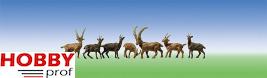 6 chamois and 6 ibexes